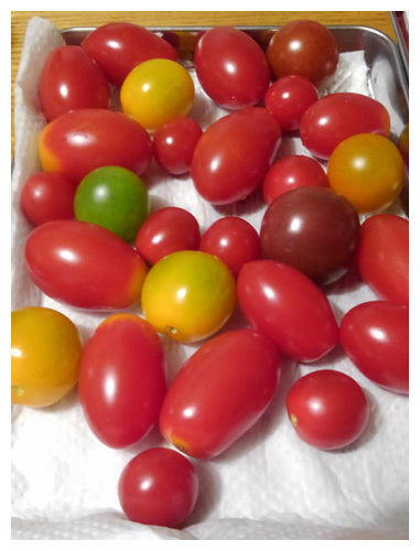 保存 プチトマト